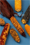 Maize (Native American Indian) 100 Page Lined Journal: Blank 100 Page Lined Journal for Your Thoughts, Ideas, and Inspiration